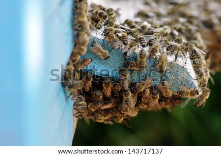 lots of bees at the beehive entrance - stock photo