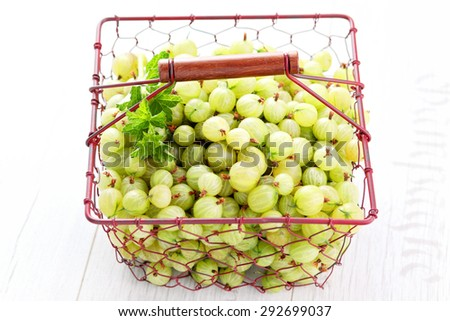 lots of delicious gooseberry - fruits and vegetables - stock photo