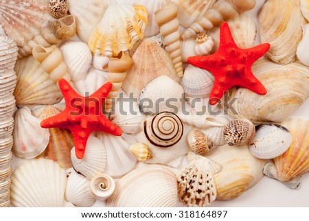 Lots of different seashells and scallops. - stock photo