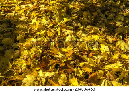 Lots of fall leaves on the ground - stock photo