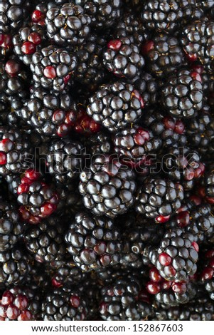 Lots of fresh blackberries and mulberries background - stock photo