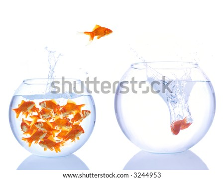 lots of goldfishes in a small bowl, and some are jumping for a better place - stock photo