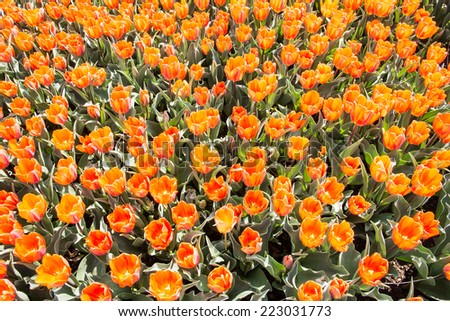 Egg M Nchen flowerage stock photos images pictures