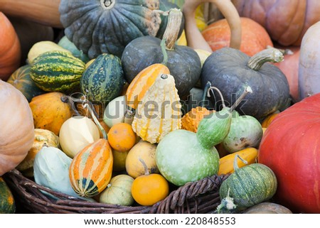 Lots of pumpkins and squash of different sorts - stock photo