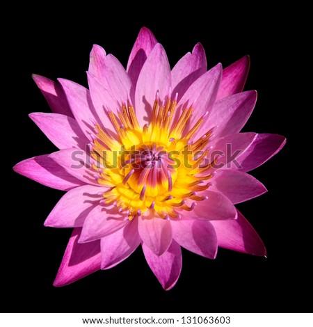 Lotus flower isolated - stock photo