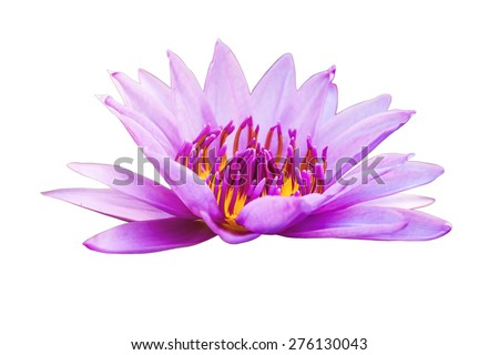 lotus flower isolated on white. - stock photo