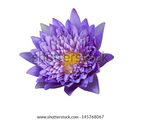 Lotus flower on isolate background - stock photo