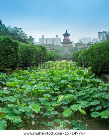 lotus in a university of Sichuan, China - stock photo