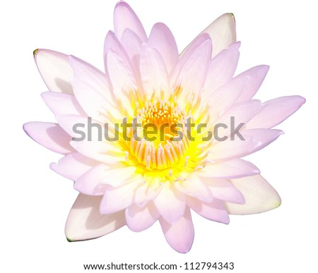 Lotus or water lily isolated - stock photo