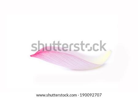 lotus petal isolated on white background. - stock photo