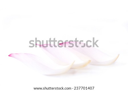Lotus petal isolated on white background - stock photo