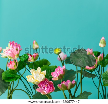 lotus water lily  - stock photo