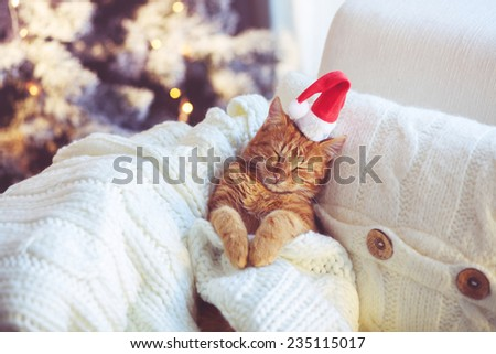 Lovable ginger cat wearing Santa Claus hat sleeping on chair under Christmas tree at home - stock photo