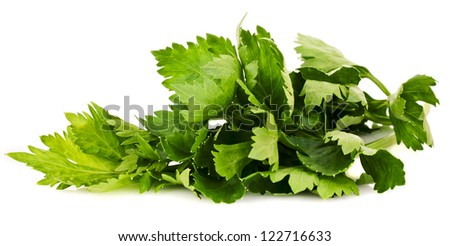 Lovage isolated on white background - stock photo