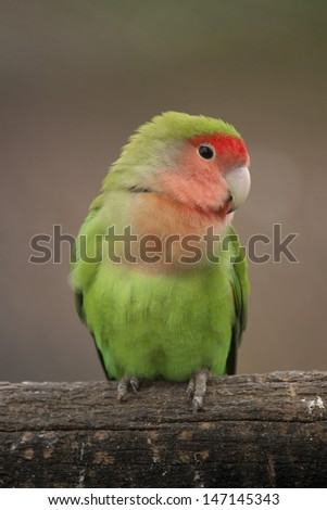 Love Bird - stock photo