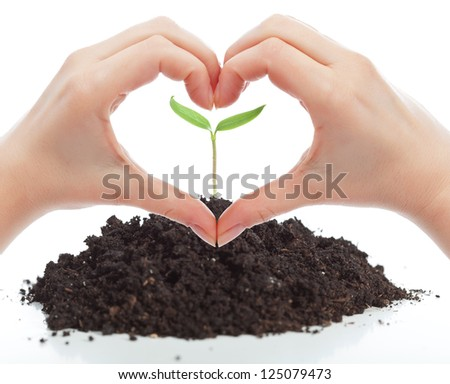 Love for nature concept with seedling and woman hands - stock photo