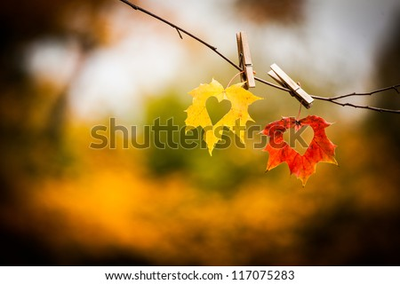 Love hearts cut in colorful autumn leaves on twig with nature background - stock photo