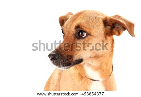 Lovely adopted mongrel dog - stock photo