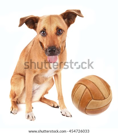 Lovely adopted mongrel dog with ball for soccer pet toy - stock photo