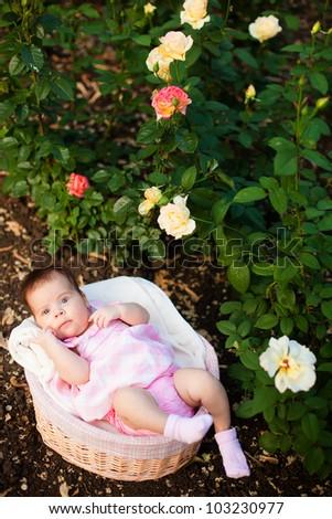 Lovely baby in basket at roses garden - stock photo