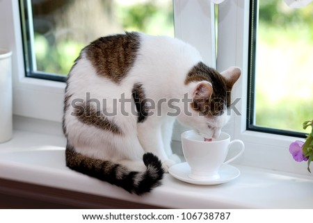 Lovely cat sitting on the window sill and drinking from the white cup - stock photo