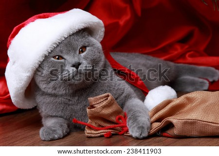 Lovely domestic animal under the Christmas tree on Holiday theme - stock photo