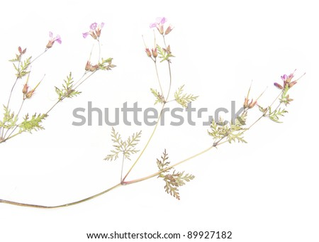 lovely floral detail and design element - stock photo