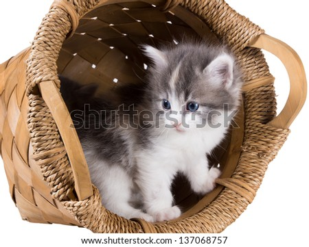 Lovely fluffy kitten in a round basket isolated on white background - stock photo