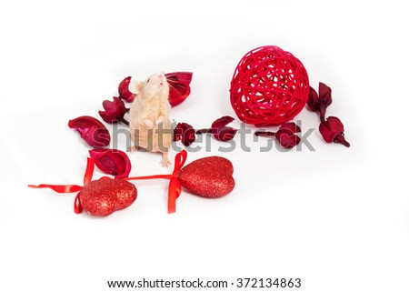 Lovely golden mouse sitting on hind legs amid dry red flowers and shiny decorative hearts. Saint Valentine's day. - stock photo
