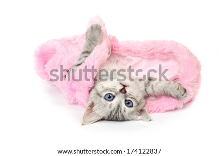 Lovely gray kitten in pink fur coat. Isolated on white background. - stock photo