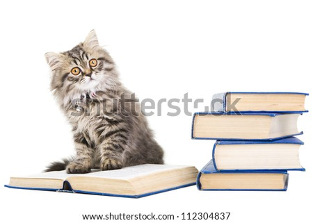 Lovely grey persian kitten sitting with pile of books on isolated white background - stock photo
