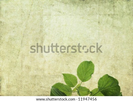 lovely light green background image with interesting texture, close-up of leaves and plenty of space for text - stock photo