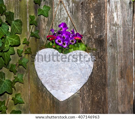 Lovely Pansies planted in a heard on a urban wooden background for garden decoration. - stock photo