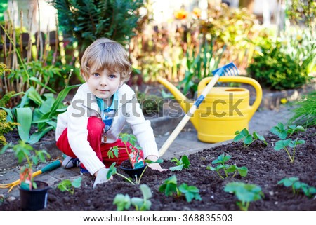 Lovely preschool blond kid boy planting seeds and seedlings of tomatoes in vegetable garden. Happy carefree childhood. Funny child having fun with gardening in spring. - stock photo