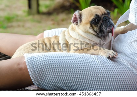 Lovely pug dog puppy tongue sticking out and sleep rest on human leg lap with beach robe - stock photo