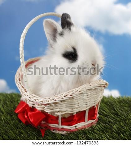 Lovely white rabbit in basket on green grass - stock photo