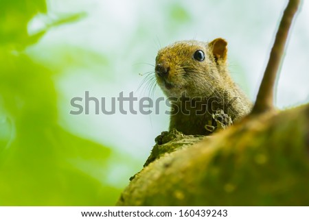 Lovely wild Squirrel come to look at us - stock photo