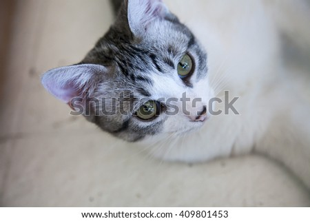 lovely young grey & withe cat on the old withe floor - stock photo