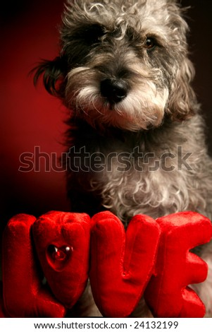 Loving dog expressing affection in front of LOVE sign - stock photo