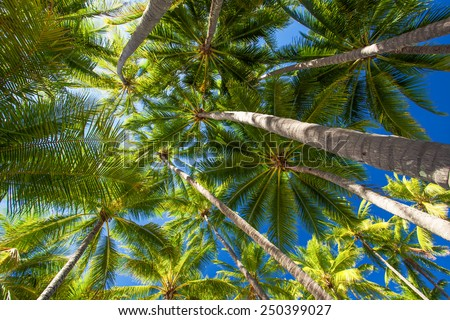Low angle photo of many palm trees on the tropical beach - stock photo