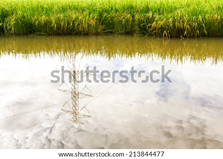 Low angle reflection water in rice farming in Thailand. - stock photo