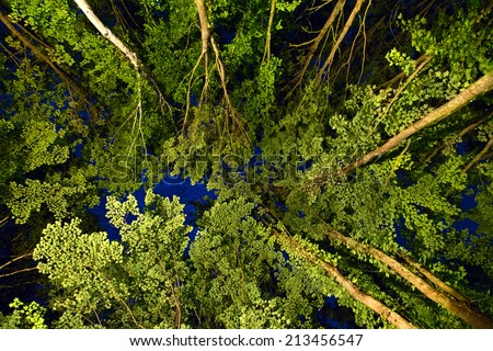 Low angle view of the stars seen through the canopy of tree tops in a forest illuminated from below.  Image contains some grain due to high ISO and long exposure required for this type of photography. - stock photo