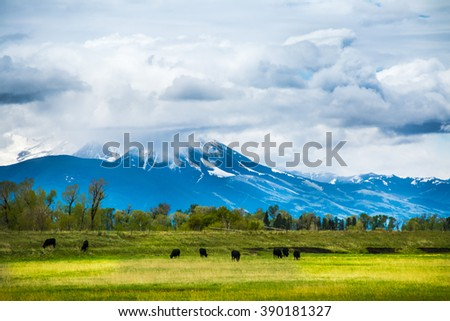 Low Hanging Clouds over Paradise Valley, in between Bozeman Montana and Livingston Montana. Cattle are grazing. Beautiful deep blue mountains and green pasture. - stock photo