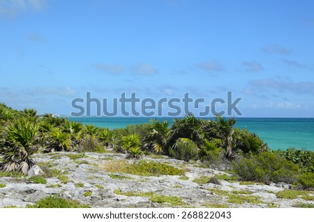 Low palm trees on rocky sea cost on a sunny windy day - stock photo