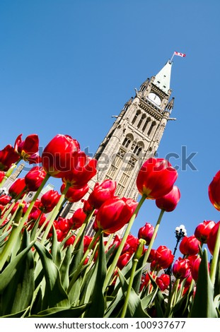 Low view of the Parliament Centre Block Peace Tower at an angle at lunchtime in spring with red tulips. - stock photo