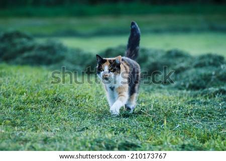 lucky cat - stock photo