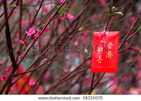 Lucky money and blossom at Chinese New Year - stock photo