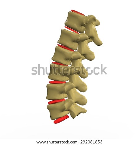 Lumbar Spine - stock photo