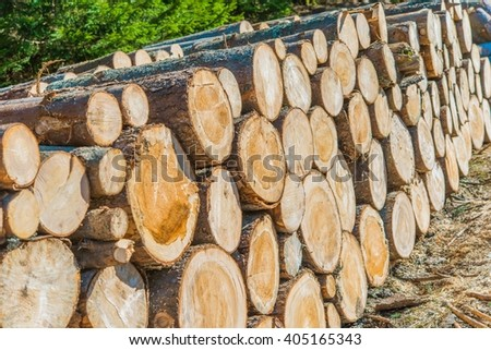 Lumber Industry Logging and Wood Storage Concept Photo. - stock photo