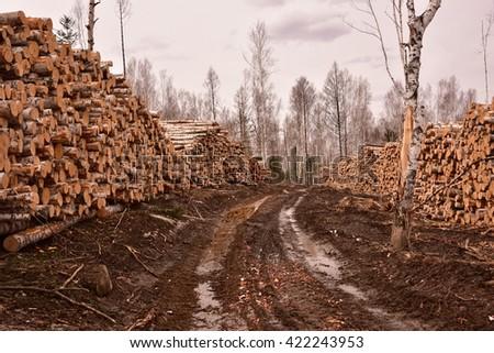 lumbering, timber cutting - stock photo